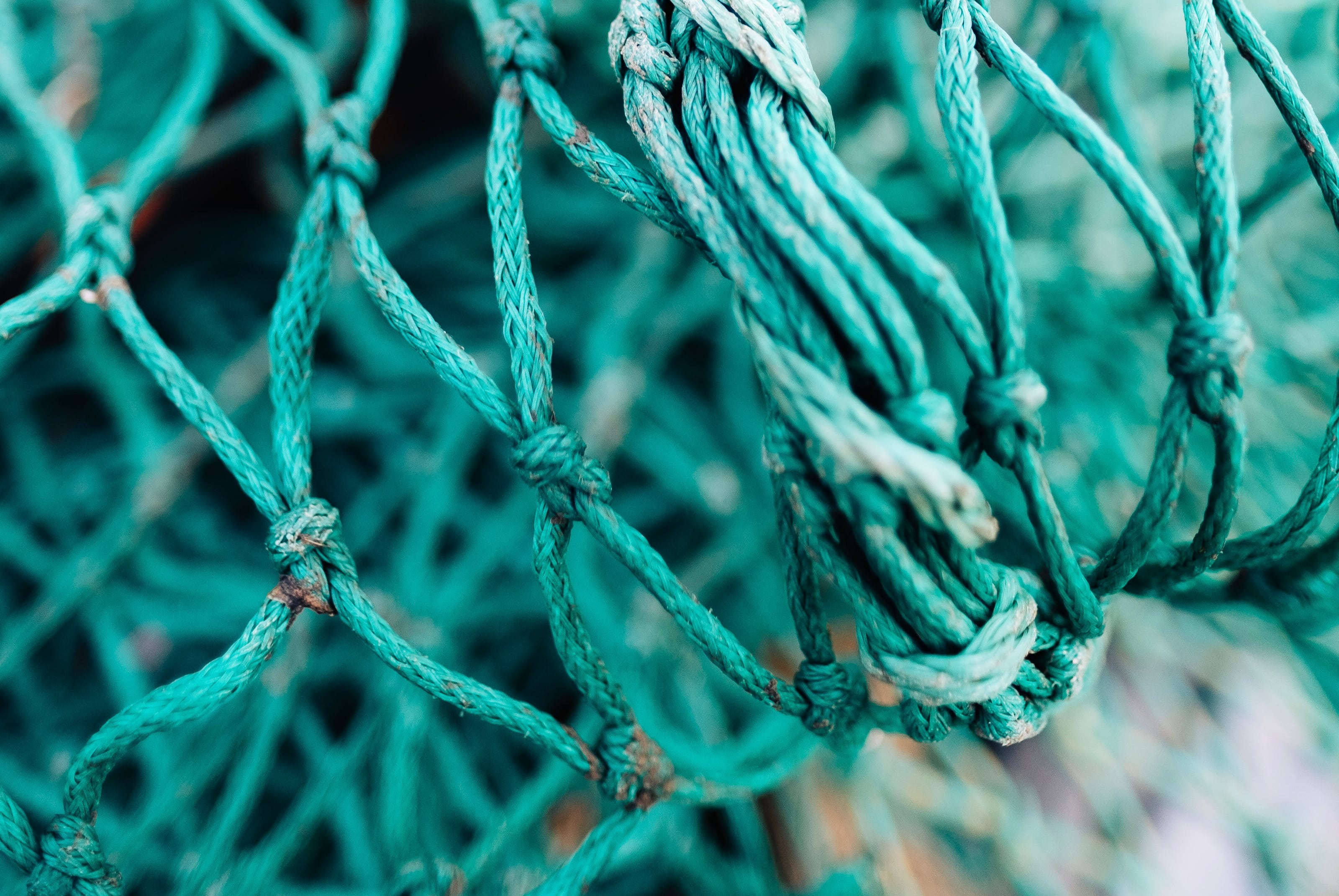 Sustainable management of the high seas could recoup fish stock ...