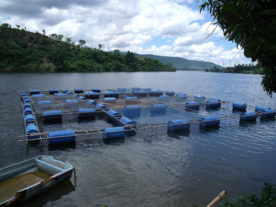 Five key aspects of sustainable aquaculture: Can aquaculture