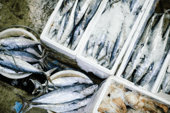 How the Largest Seafood Suppliers Involved in Wild Capture Fisheries